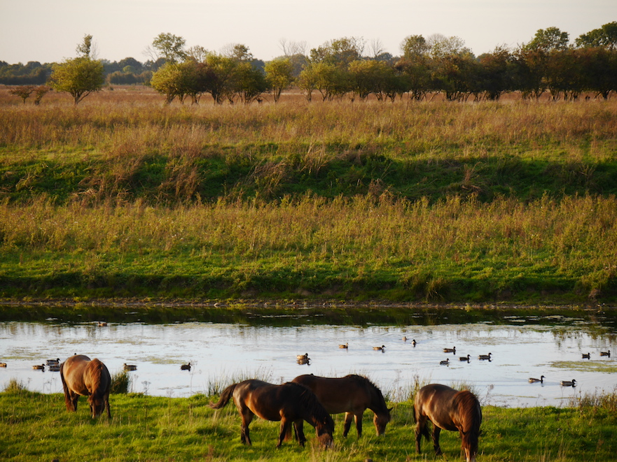 paarden in de natuur doen aan zelfmedicatie tegen wormbesmetting