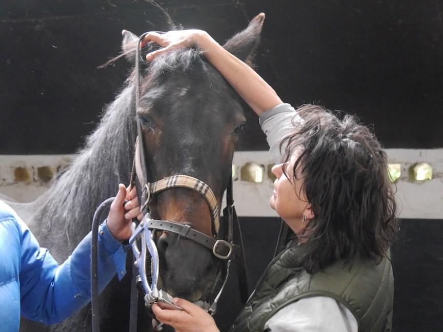 de mondsperder van de paardentandarts