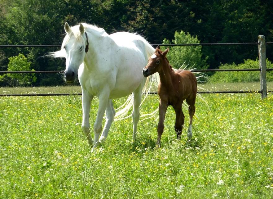 Paarden in kruidenrijk grasland Landerade