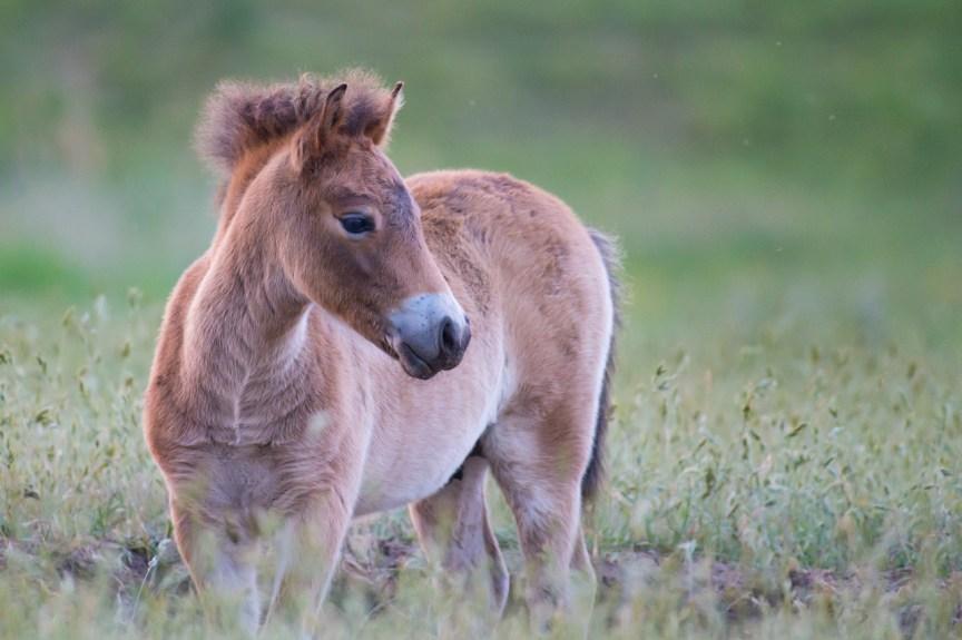 Natuurlijk Paarden fotoblog door HvZ fotografie