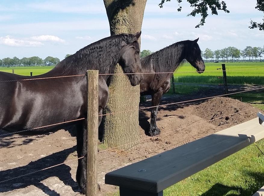 track zelf aanleggen voor je paard