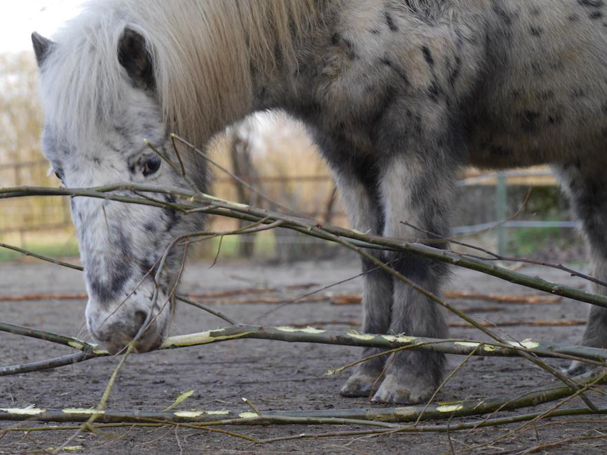 takken voeren aan je paard: een gevarieerde voeding