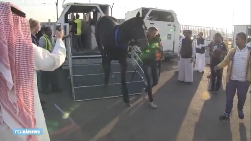 paardenvervoer naar koeweit