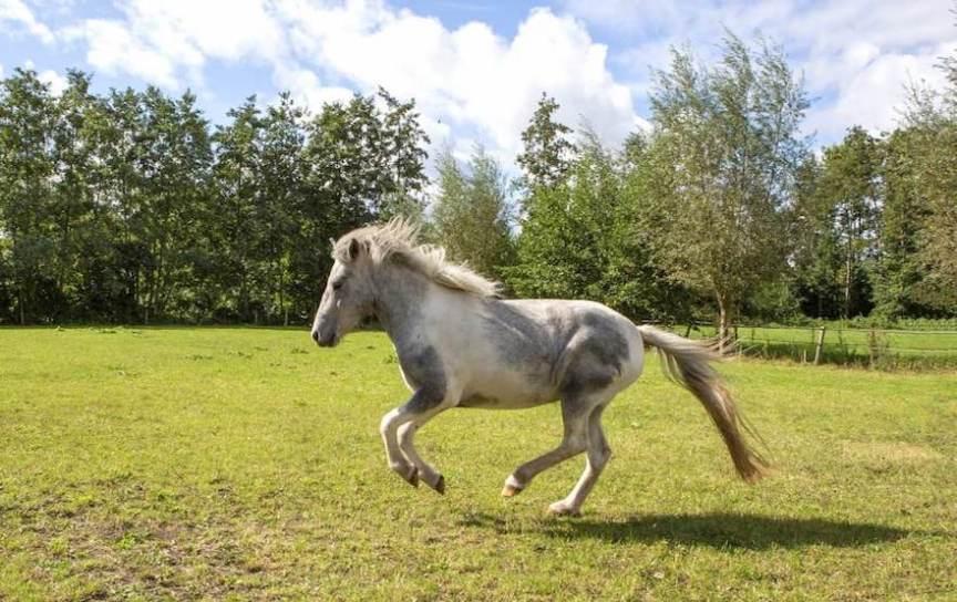 ontwikkelen van bloemrijke paardenweide