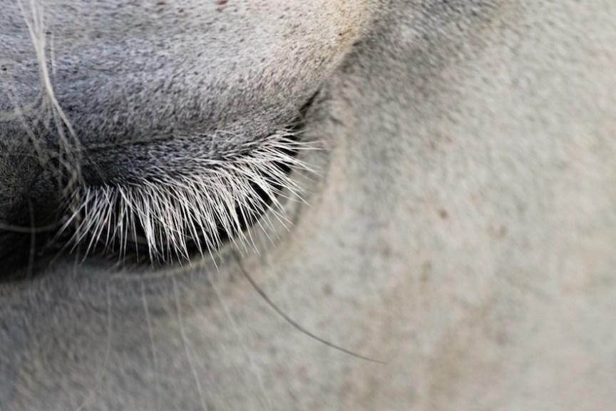 apathisch paard zonder sociaal contact