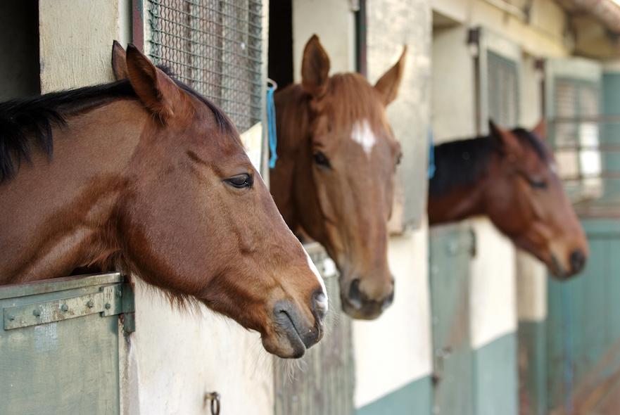 paardenwelzijn bij huisvesting in een box