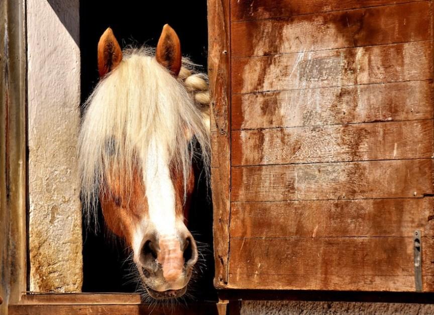 Paarden horen niet in een paardenbox
