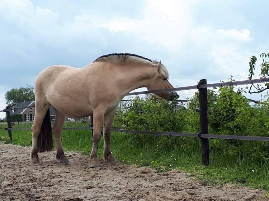 meidoornhaag planten voor paarden
