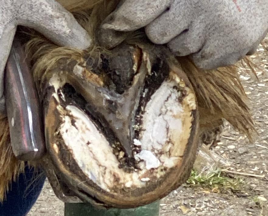 rotstraal behandelen met Unique-horn