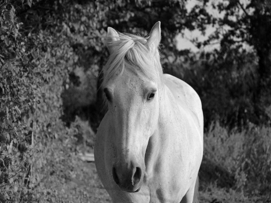 paardenwelzijn meten oren