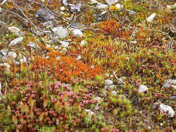 Растительный мир тундры: названия видов, описание и фото ...