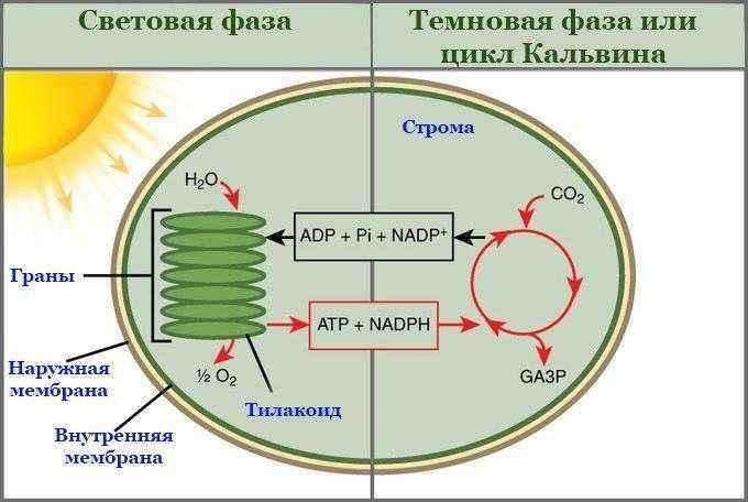 центральное место в молекуле хлорофилла занимает атом кредит онлайн с плохой кредитной историей отзывы