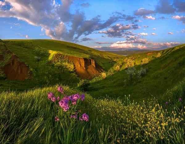 Растения, занесенные в Красную книгу Ставропольского края ...