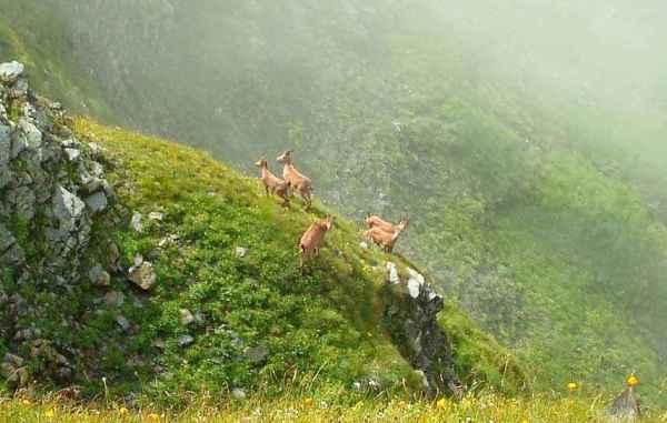 Животные, занесенные в Красную книгу Краснодарского края ...