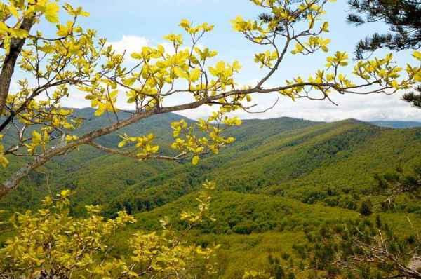 Растения, занесенные в Красную книгу Краснодарского края ...