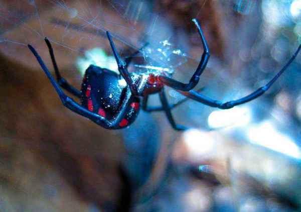 ТОП 10: Самые ядовитые и опасные пауки в мире - фото ...