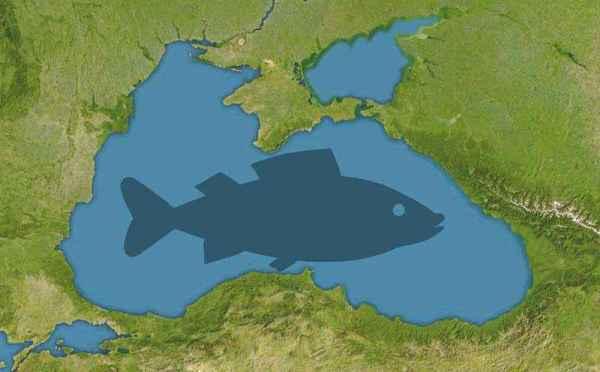 Рыбы Черного моря - названия видов, фото и описание ...