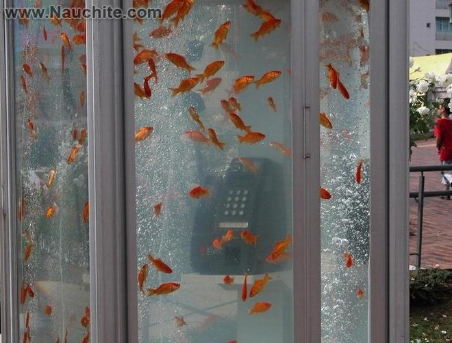 phone_booths_aquariums_02.jpg