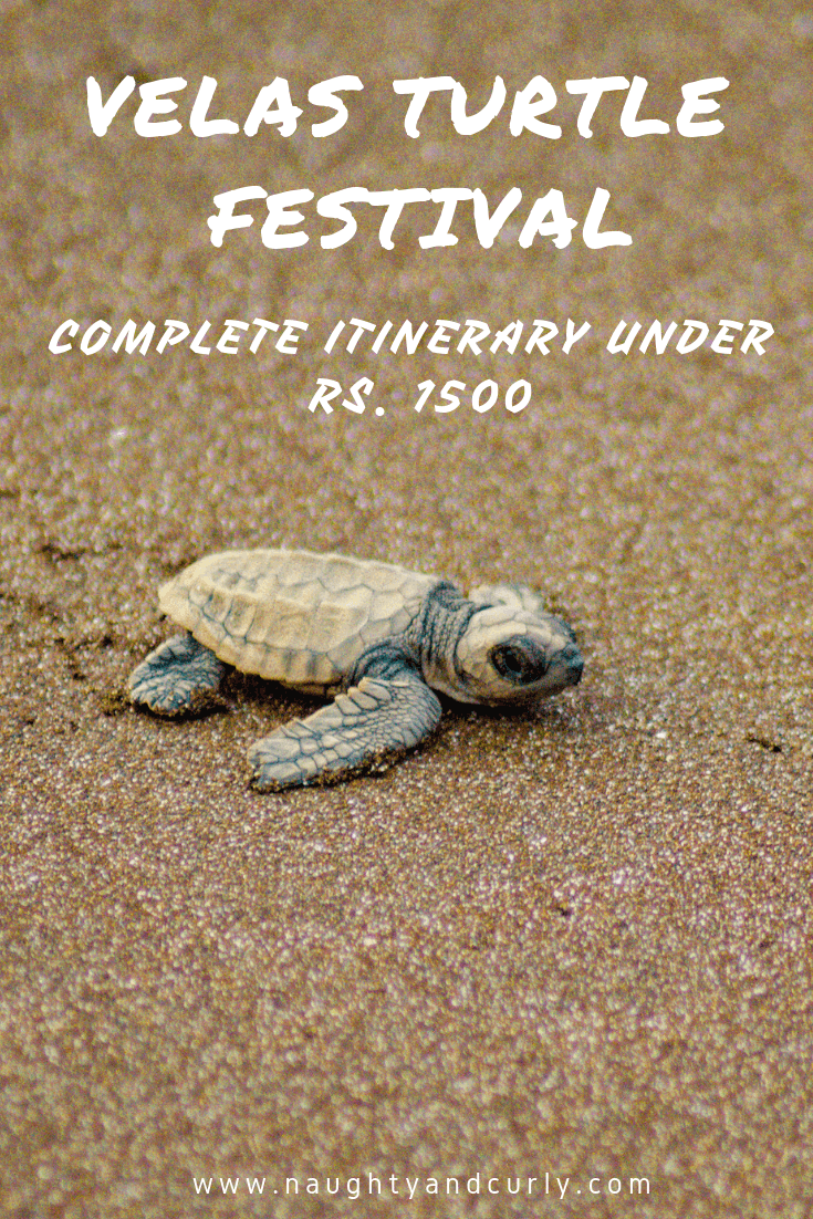Velas Turtle Festival under Rs. 1500