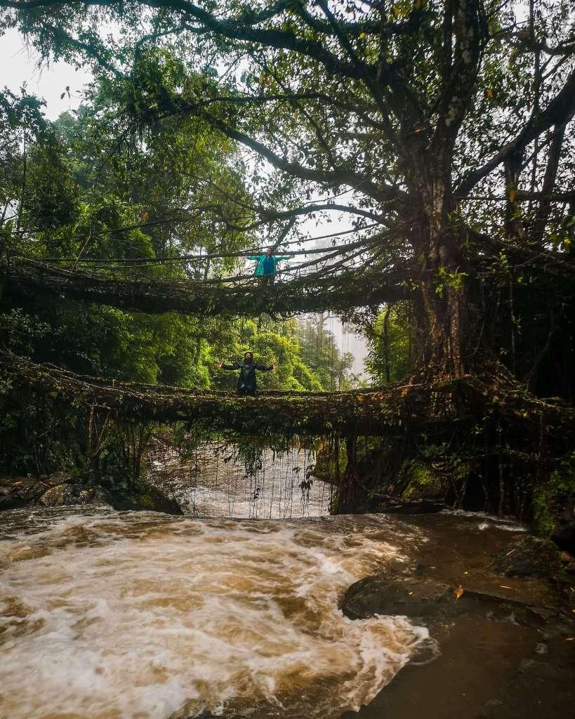 Double Decker Living Root bridge_Meghalaya