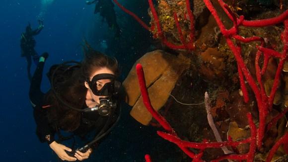 Specialty Diver Courses | NAUI Worldwide | NAUI Worldwide ...