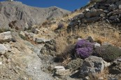The path to Ancient Thira, a 9th Century BC Spartan village
