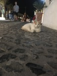 """As far back as I could remember I always wanted to be a stray cat. My name is Vassilissa, although I hear the Fanny Packs call me """"Awww"""" , and I'm the luckiest cat on Santorini."""