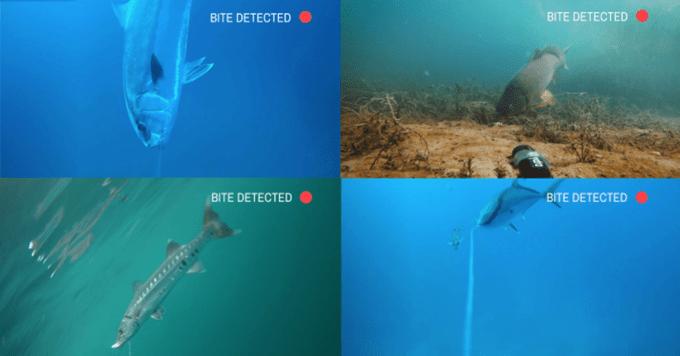 Cámara Spydro para la vida submarina