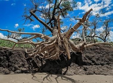 Punta Indio, donde el río se come la costa