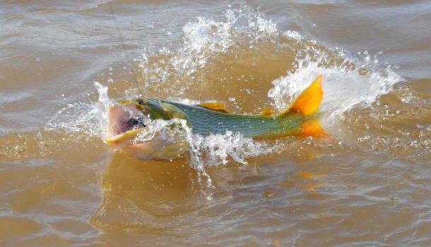 Evalúan veda de pesca por bajante del Río Paraná