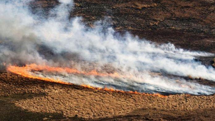 Delta del Paraná Incendios