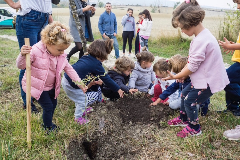 Reduce-Reforestacion-Monte-Peques