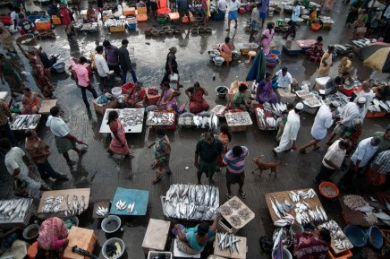 Kasimedu fish market, Chennai by Naveen P M
