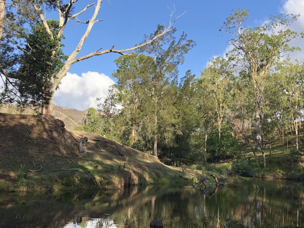Christmas creek with surrounding greenery