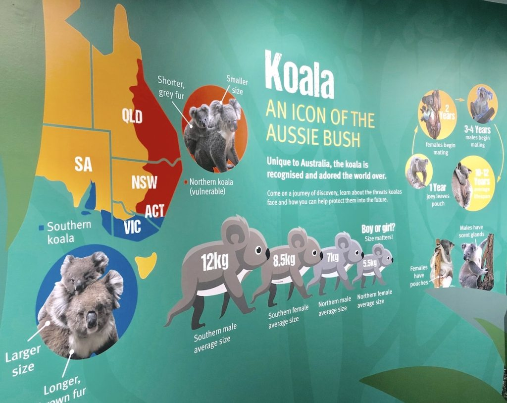 Daisy Hill Koala Centre educational display