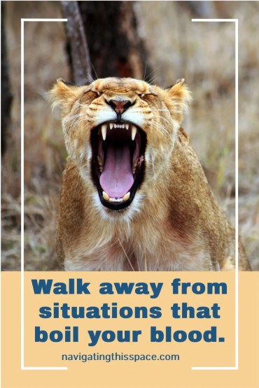 An angry lioness roars with her mouth open reminding us to Walk away from situations that boil your blood
