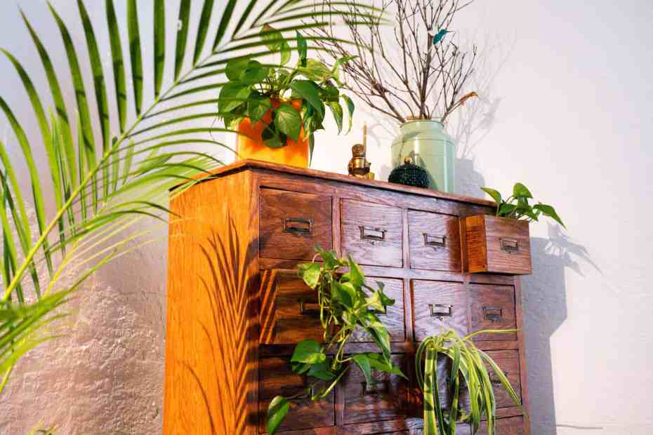 Brown Chester drawer filled with plants growing and ornaments sitting on top