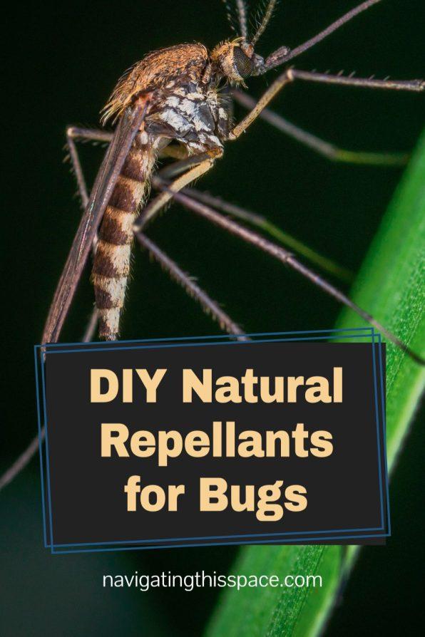 DIY Natural repellants for bugs