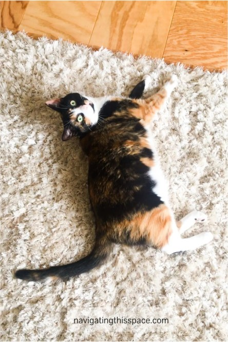 Playful cat laying on a shaggy carpet