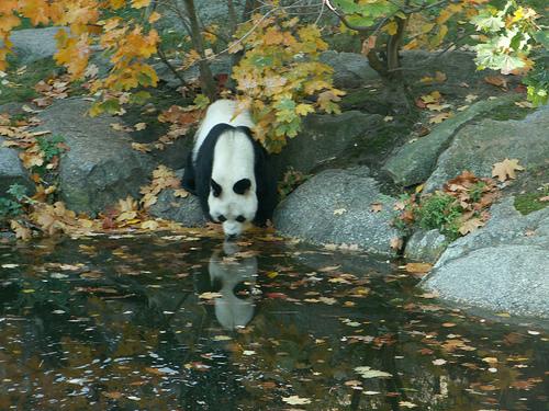 zenfulpanda