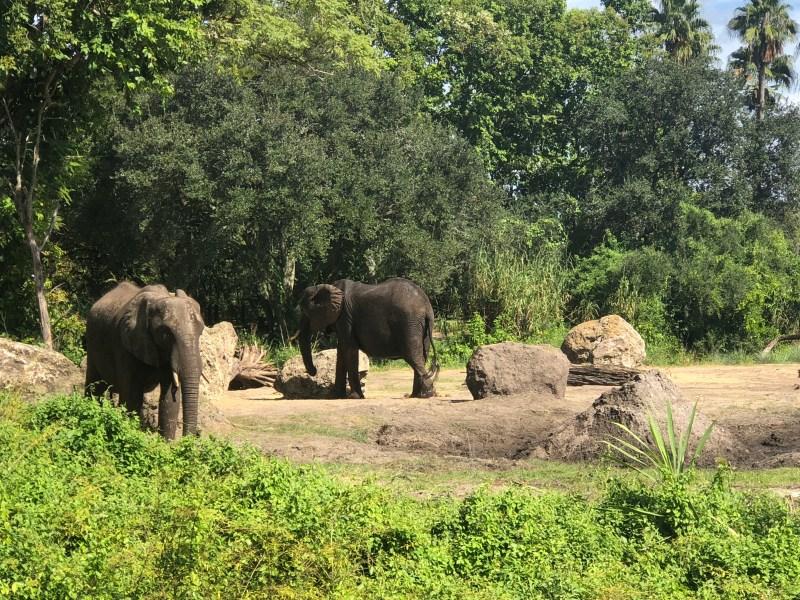 Disney's Animal Kingdom: Kilimanjaro Safari.