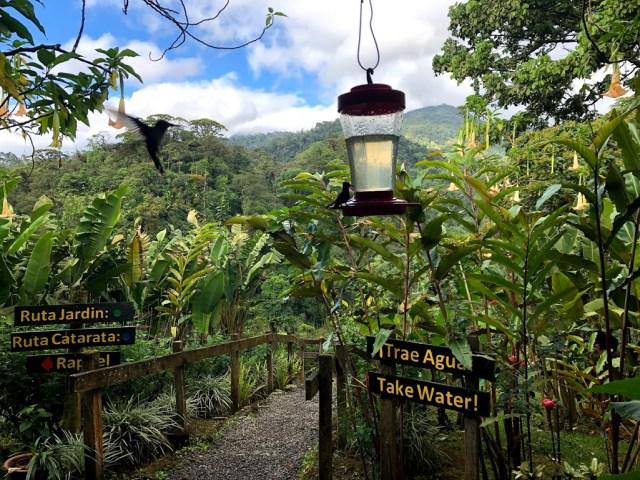Hummingbirds at Catarata Del Toro Adventures in Costa Rica.