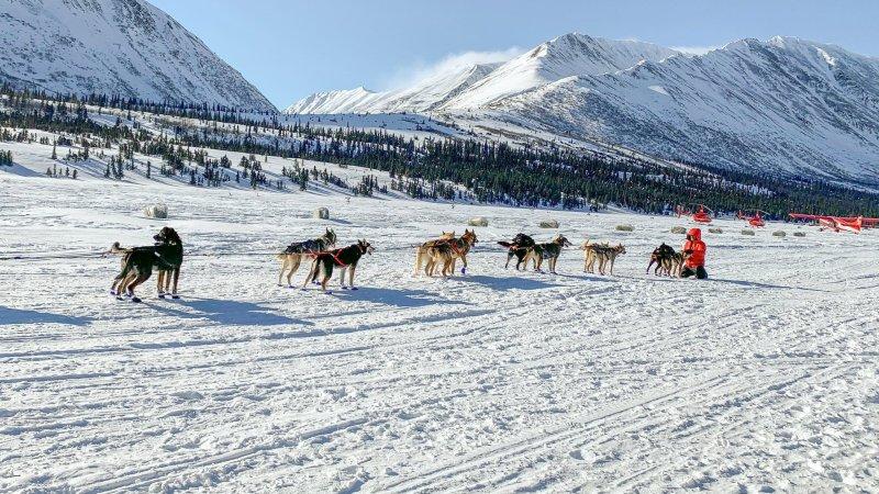 The 2020 Iditarod Dog Sled Race in Alaska