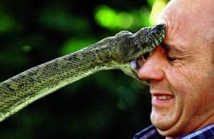 snake biting face