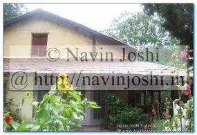 सूरजमुखी @ Gurney House, NainitalJim Corbett's House