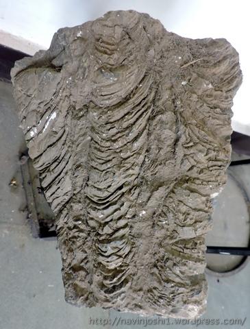 Fossil Stones (4)