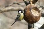Як зробити годівницю для птахів з кокосового горіха?