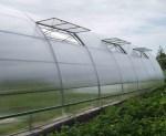Теплиці з полікарбонату — оптимальна ціна високої якості.