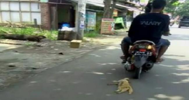 Viral Kucing Diseret Pakai Motor.