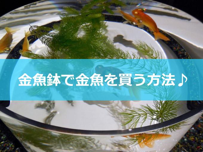 金魚鉢-01